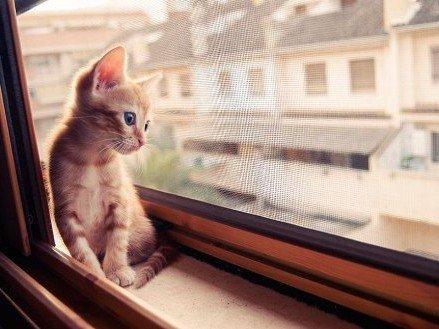 Сетка на окна Антикошка на деревянные окна