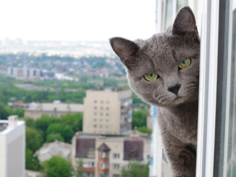 Сетка на окно для кошек