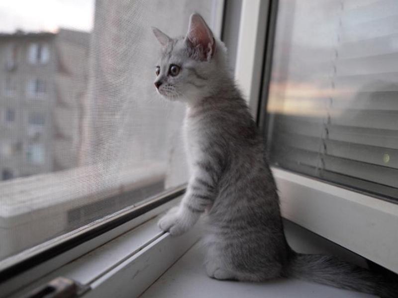 Сетка антикошка на окна