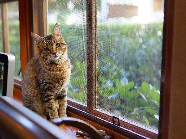 Сетки на окна в загородные дома