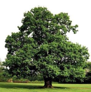 Деревянные евроокна из дуба