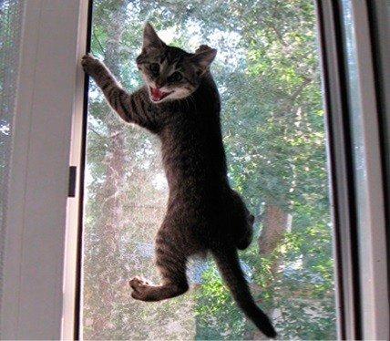 Антикошка на балкон