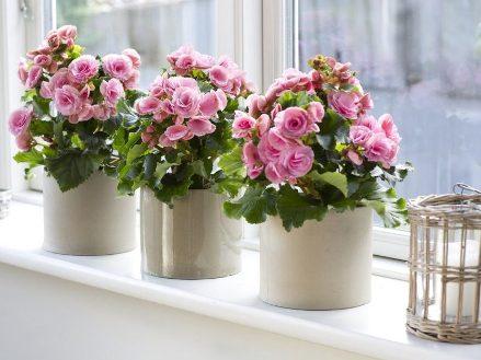 Энергосберегающие окна и цветы
