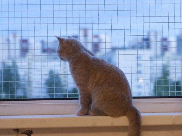 Заказ окна с москитной сеткой
