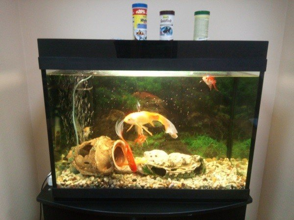 Русроллс аквариум для развлечения клиентов